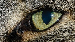 20151030 Kattenoog.jpg
