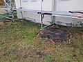 20201101 Zwei Kastanien an der Detterkapelle1.jpg