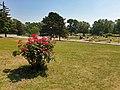 20210620 Donaupark Rosengarten.jpg