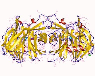 Nucleoside-diphosphatase group of proteins having nucleoside-diphosphatase activity