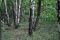 46-253-5002 Lotatnyky RB 18.jpg
