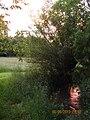 76865 Rohrbach, Germany - panoramio (1).jpg