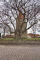 800-jährige Linde vor der St.Blasiuskirche in Großgoltern (Barsinghausen) IMG 4469.jpg