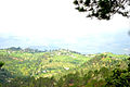 A Panoramic view of Pine and Oak trees from Ranikhet in Uttarakhand in northern India.jpg