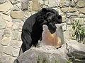 A Silesian Zoological Garden abrah 40.JPG
