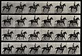A cantering horse and rider. Photogravure after Eadweard Muy Wellcome V0048752.jpg