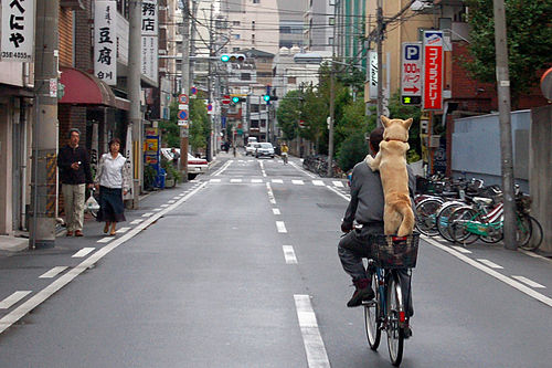 A dog riding the bicycle