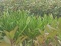 A few bushes.JPG
