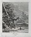 A young doe standing at a lake with a buck in the background Wellcome V0021044EL.jpg