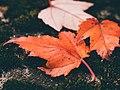 Aaron Burden 2015-11-05 (Unsplash Ndc6FS9v hw).jpg