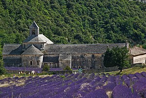 Appellation d'origine contrôlée - Lavandula angustifolia at the Abbaye de Sénanque in Gordes in the département of the Vaucluse