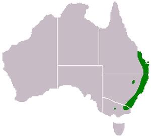 Acacia maidenii - Image: Acacia maidenii range map