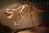 Liste de dinosaures vikidia l encyclop die des 8 13 ans - Liste de dinosaures ...
