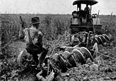 A photo from a 1921 encyclopedia shows a tractor ploughing an alfalfa field