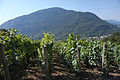 Albertville vineyard.jpg