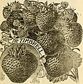 Allen's descriptive catalogue of choice strawberry plants - grown and for sale by W. F. Allen, Jr (1895) (17919295750).jpg