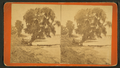 Along the St. John's, Palatka, Fla, from Robert N. Dennis collection of stereoscopic views.png
