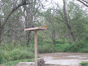 A photo of an altamira oriole at a feeder with other birds in Bentsen-Rio Grande Valley State Park