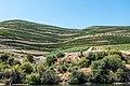 Alto Douro Vinhateiro DSC00232 (36475999784).jpg
