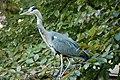 Amsterdam Zoo (3799382618).jpg