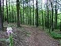 An einem Waldweg - panoramio.jpg