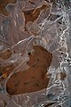 An iced puddle on a track - geograph.org.uk - 1137644.jpg