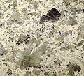 Anatase-Quartz-Brookite-230498.jpg