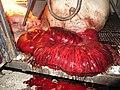 Animal Cruelty Iowa Select Farms IS 2011-05-31 08 (5841342408).jpg