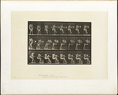 Animal locomotion. Plate 244 (Boston Public Library).jpg
