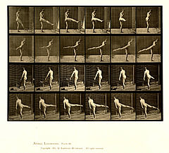Animal locomotion. Plate 370 (Boston Public Library).jpg