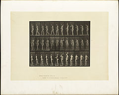 Animal locomotion. Plate 426 (Boston Public Library).jpg