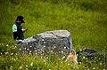 Animals mammal Marmot visitor people texting NPS Photo (17184731998).jpg