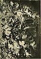 Annali di botanica (1923) (18411516775).jpg