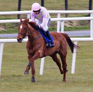 Annie Power Irish-bred Thoroughbred racehorse