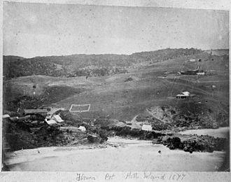 Pitt Island - Flower Pot Bay in the northwest 1877
