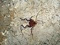 Aranha Sinistra - panoramio.jpg