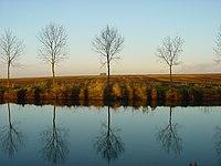 Arbres canal de Saint-Quentin.JPG