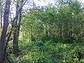 Arbres et arbustes non-identifiés à Grez-Doiceau 003.jpg