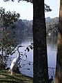 Ardea alba, Zoológico de São Paulo.jpg