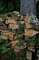 Armadale Castle - wood pile 1.jpg