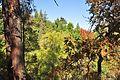 Ashland, Oregon - Lithia Park 07.jpg