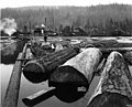 Atlas Lumber and Shingle Co, probably at McMurray, Skagit County, showing mill and log pond (CURTIS 1194).jpeg
