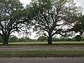 Audubon Park New Orleans 7 April 2020 - 10.jpg