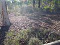 Aussie Battler Mound - Flickr - GregTheBusker.jpg