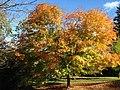 Autumn Colour (30861039591).jpg