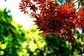 Autumn Red Leaf.jpg