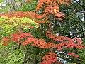Autumn beauty (36943697173).jpg