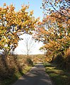 Autumn colours on Greenways - geograph.org.uk - 1586104.jpg