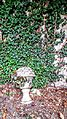 Autumn leaves, ivy walls, marble marker.jpg