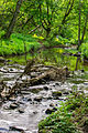 Babbling brook (8953595784).jpg